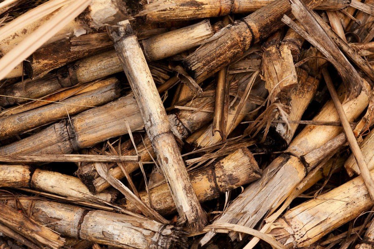 emergie biomasse